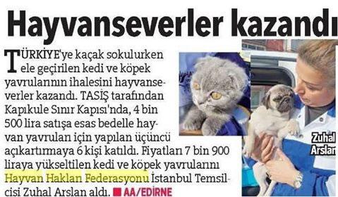 (*)Kedi ve Köpekleri Petshopçuların Elinden Yine HAYTAP Kurtardı!