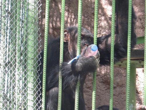 Maraş Sulh Hukuk Mahkemesi Hayvanat Hapishanesi İle İlgili Tespit  İstemimiz
