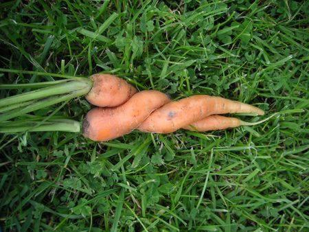 Bitkisel Beslenmenin Sağlık Üzerindeki Faydaları