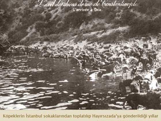 Osmanlıda Hayvan Hakları