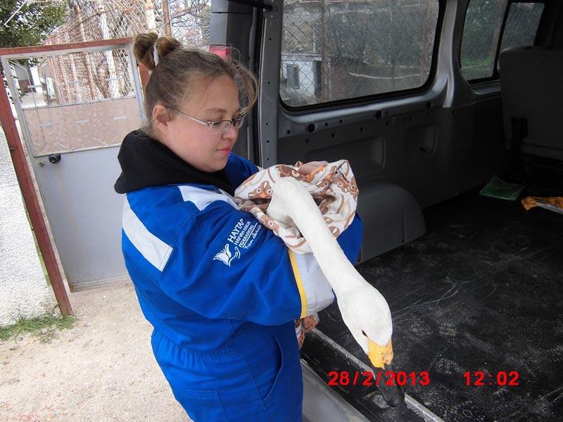 Haytap Ekibinin Kuğu, Vaşak, Tavşan ve  Şahin'i Kurtarma Operasyonu