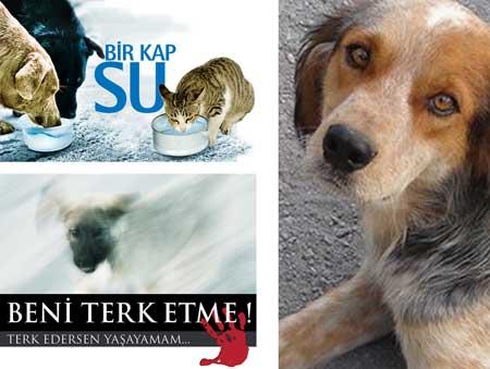 HAYTAP ''Beni Terk Etme'' ve Bir Kap Su Kampanyaları 2010 Yılında da Devam Ediyor..