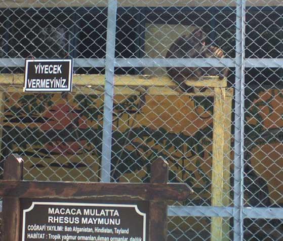 Hayvanat Bahçelerinin Kapatılması İle İlgili Dilekçe