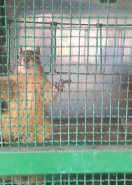 Zonguldak  Özel Hayvanat Bahçesinin Kapatılması İstemimiz