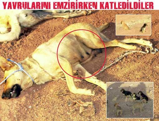 Hayvanları Koruma Yasası uygulamasında eksikler var (*)