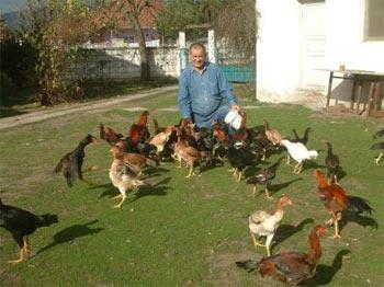 ÖRGÜTLENİYORLAR :  Kanatlı Kümes Hayvanları Federasyonu Kuruldu