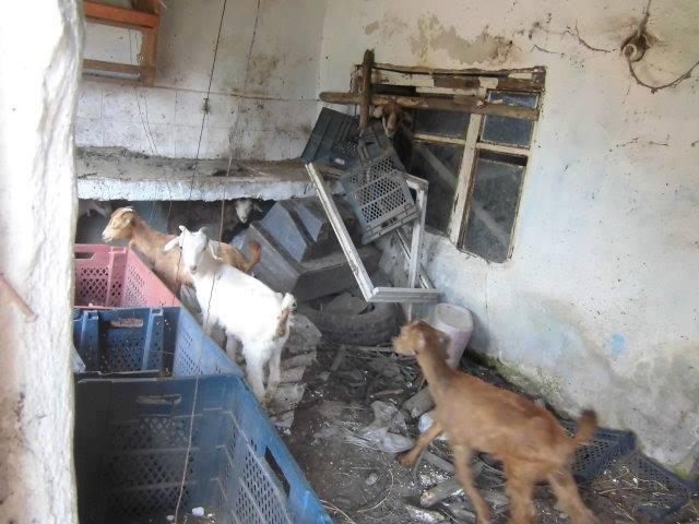Haytap Yaşam Aracı İpsala'da!- Kurtarılan Keçiler, Belediye Meclis Toplantısı