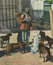 Bir Yabancının Kaleminden İstanbul'un Köpekleri