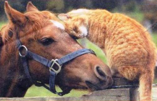 Hangi Hayvanın Hakkını Savunuyoruz ?
