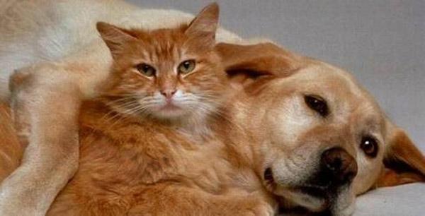 ''Sana Köpek Aldım'' Dönemi Bitiyor