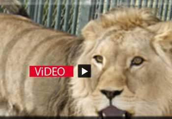 Konya Hayvanat Hapishanesi Kapatılmalı ! -   ( 2010 yılı başvurumuz)