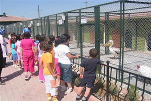 Hayvanat Bahçelerindeki Çığlığı Kim Duyacak?