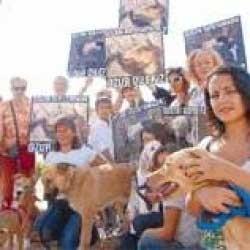 Hayvana  İşkence Edenler TCK'ya  Göre Yargılanmalı !