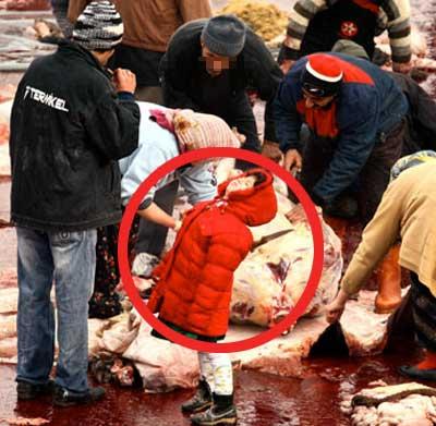 Kuzuların Canını Acıtmayın - Bekir Coşkun