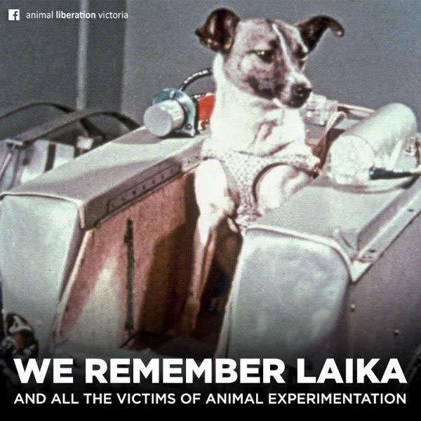 We remember Laika