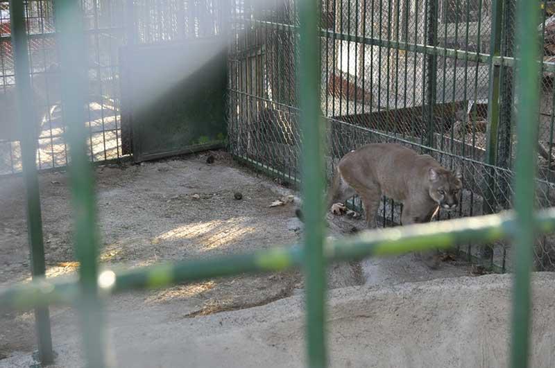 Maraş'ta Benzinlikte Tutulan Hayvanların Nakli İstemi