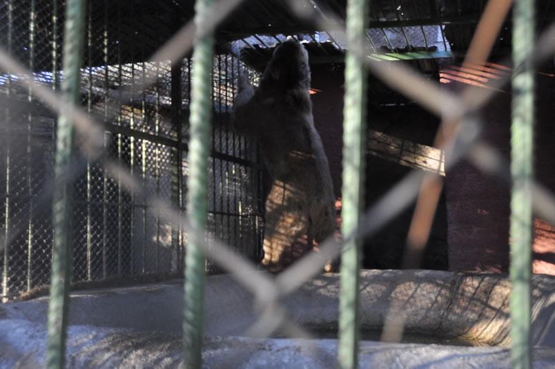 Bir Can Daha HAYTAP Sayesinde Hapis Hayatından Özgürlüğe Adım Attı ! Maraş
