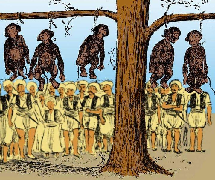 İstanbul'un maymunları neden idam edildi?
