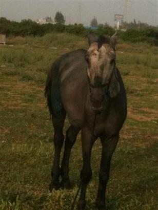 Mersin'de Yakılan Atların Tedavisi Haytap Tarafından Yaptırılıyor