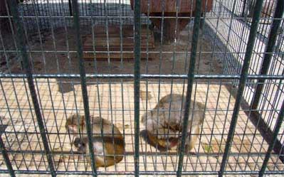 Miller Oto Hayvanat Bahçesi Boşaltılıyor !