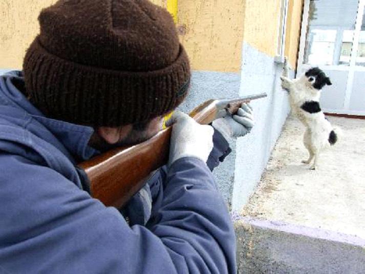 Köpek  Toplama Halinde Dilekçe Örneği