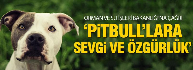 Haytap: Hayvana Değil İnsana Ceza Gelmeli