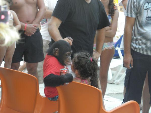 (*)  Haytap ,Otellerdeki Şempanzeler İçin Başvurdu