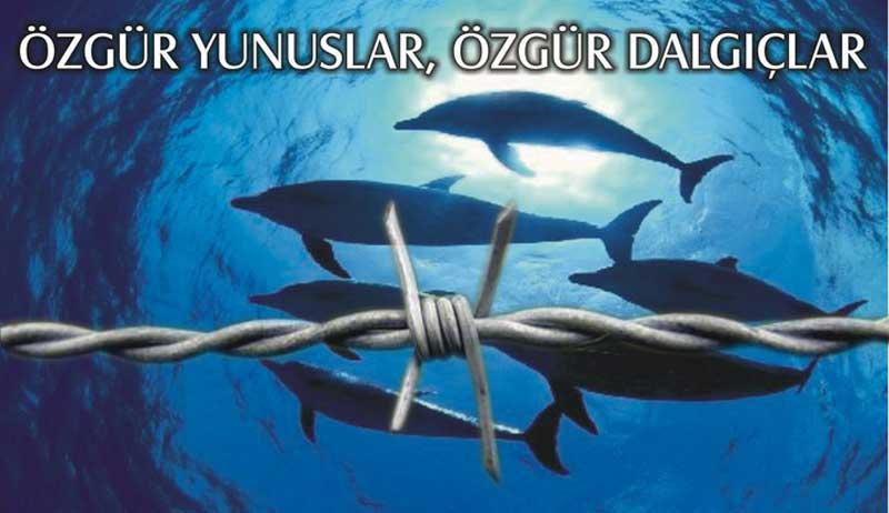 HAYTAP ''Tutsak Yunuslar İçin Özgürlük Dalışı Yaptı''