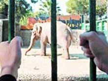 Hayvanat Bahçeleri ve Pakbahadur !
