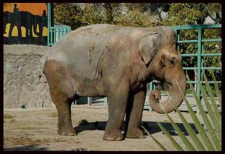 NTV-Banu Güven - Haytap ''Hayvanat Bahçelerine Hayır''