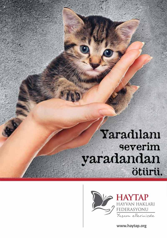 Hayvan Hakları İçin Dini Mesajlar - Sabah