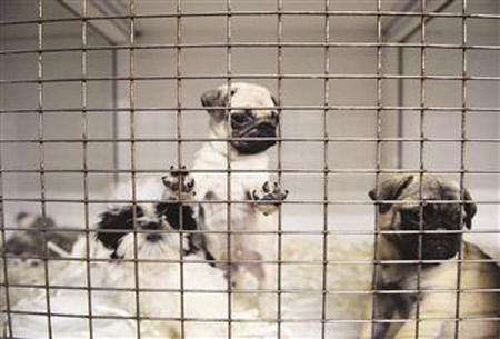 (*) Turkey To See Tighter Laws For Pet Shops: Minister