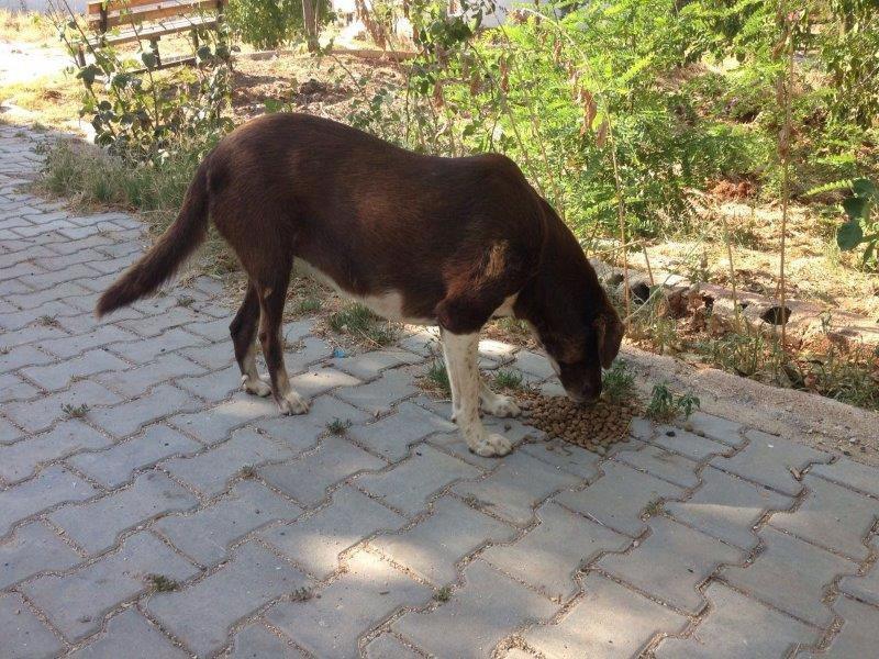 Haytap ve Petlebi İşbirliği ile Gaziantep'e Ulaşan Mama Bağışları