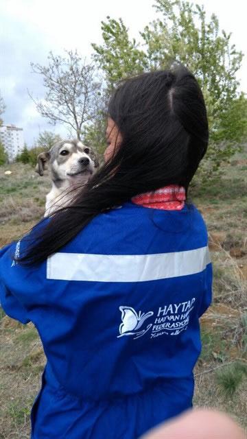 Haytap ve Petlebi İşbirliği ile Ankara'daki Canlara Ulaşan Mama Bağışları