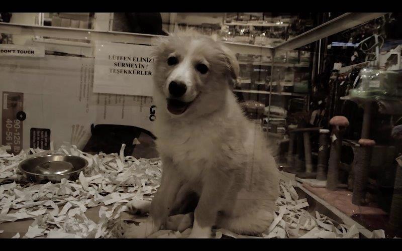 Hayvanlar Dilsiz, Yasalar Kör - Radikal Gazetesi