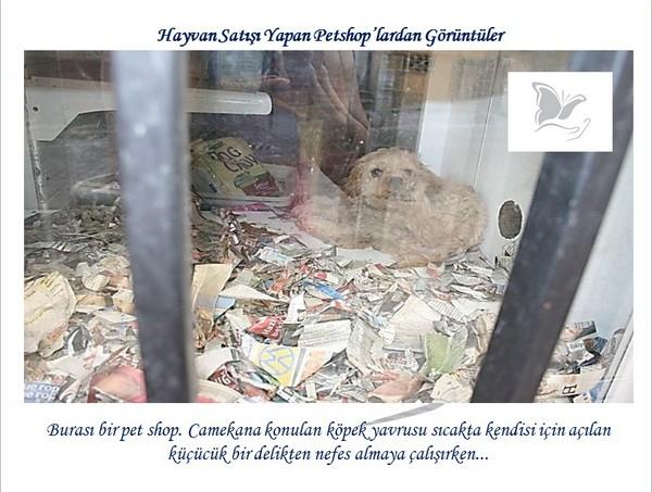 Hayvan Satışı Yapan Petshopların Gerçeği -1