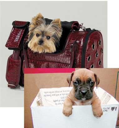 Pet Shop mu Hayvan Hapishanesi mi?
