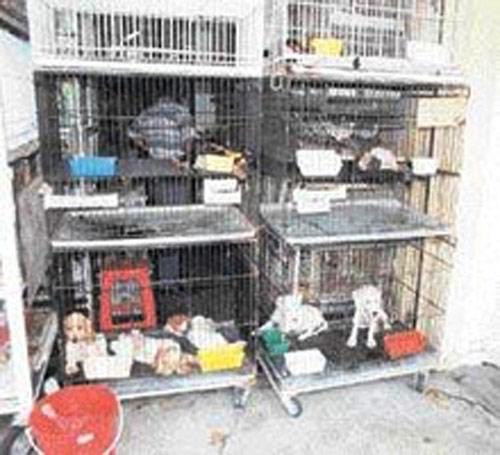 Kanlı Pazar : Petshoplar ve Hayvan Kaçakçılığı (*)