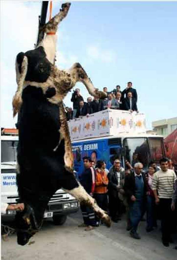 Hayvan Hakları İle İlgil Av.Şenpolat İle Söyleşi-2010
