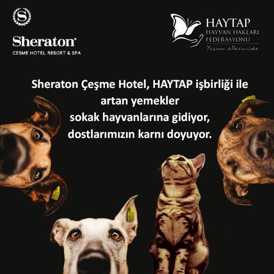 Sheraton Çeşme Hotel & Haytap işbirliği ile artan yemekler sokak hayvanlarına gidiyor!