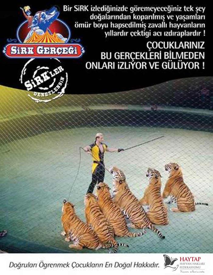 Gaziemir Belediyesi ''Hayvansız Sirk'' Kararı Aldı