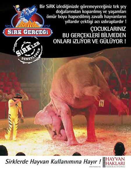 Sirklerde Hayvan Kullanımına Karşı Kampanya !