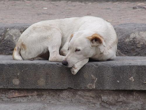 Hayvanların Tahliyesi ve Toplanmasına İlişkin  Olumsuzluklar Hakkında Yasal İşlem Talebi