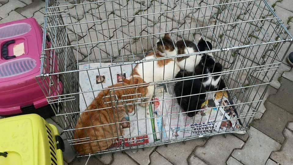 Sur'daki sokak hayvanlarını 2. Kez HAYTAP üyeleri kurtardı