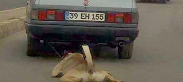 Trafikte Aracın Arkasından Hayvan Sürüklemek