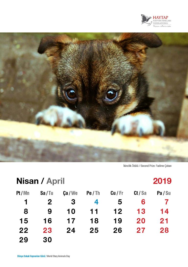 HAYTAP 2019 Yılı Duvar ve Masa Takvim Siparişleri