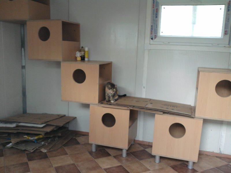 Haytap 2013 Takvim Geliri Diyarbakır'da Kedi Evli Oldu
