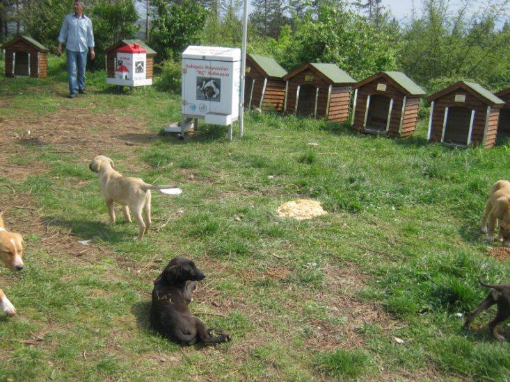 Haytap 2013 Takvim Geliri Sakarya'ya Köpek Kulübesi Oldu