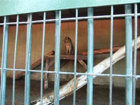 '' Tarsus Belediyesinden Hayvanat Bahçesinin Düzeltileceğine Dair Bir Söz Daha ''