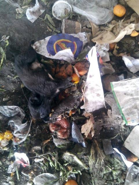 Haytap Ekibi Tavşanlı Çöplüğündeki Canlar İçin Yine Oradaydı